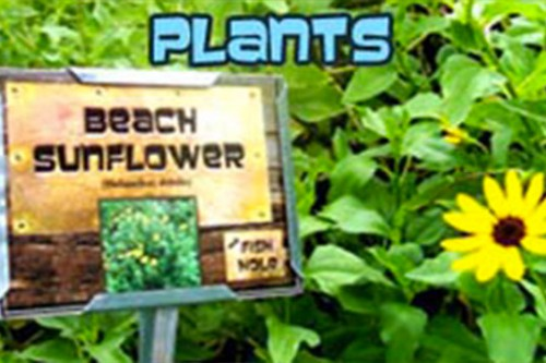 Plants with sign that says Beach Sunflower